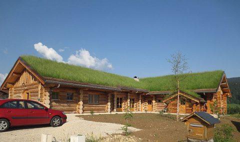 Isolation de son toit : la toiture végétalisée